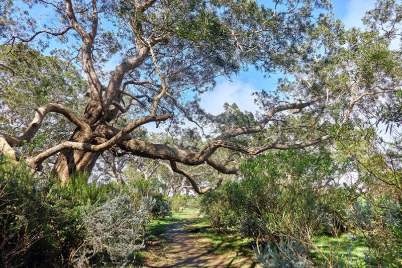 Mahavèl - Notre-Dame-de-la-Paix @ Sentier Botanique Notre Dame de la Paix