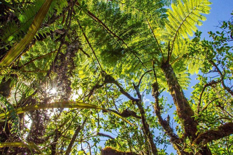 Jalouserie dann Bras-Cabot – Plaine des Palmistes @ Fôret de Bras-Cabot - Plaine des Palmistes